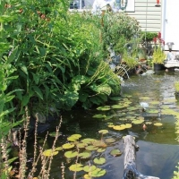 Lecroy Yard -  Pond and Garden