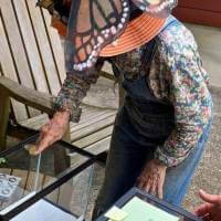 20200627 04 Carolyn Finzer Releasing Monarch Butterfly in Beth and Russell Frees' yard