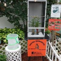 Monarch butterfly nursery